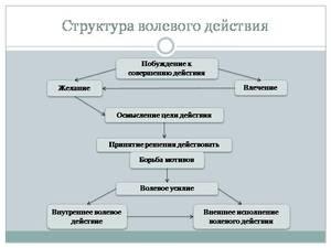 volya-v-psihologii.jpg