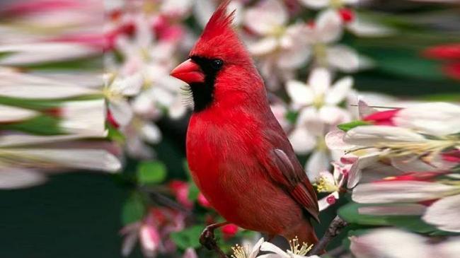 Символика-красного-цвета.jpg