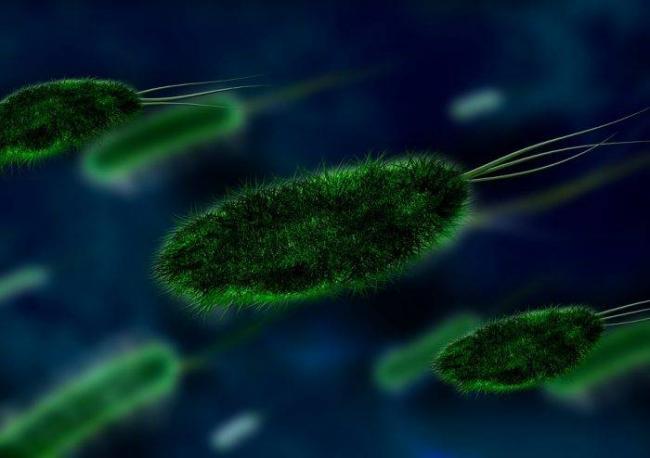 bacteria-106583_960_720-e1503586989996.jpg