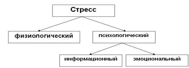 vidu-7.jpg
