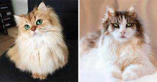 30 самых красивых котов и кошек, покоривших интернет