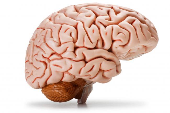 1-kratkovremennaja-pamjat-zavisit-ot-mozga.jpg