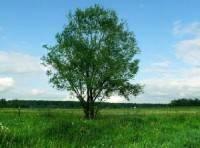 дерево-200x148.jpg