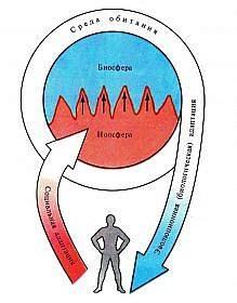 adaptaciya-cheloveka-vidy-ponyatie-i-faktory-1-219x280.jpg