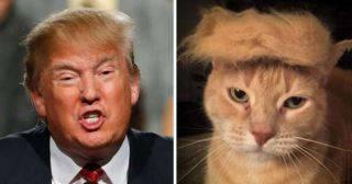 21 фото, напоминающее Дональда Трампа