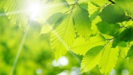 zelenyj-cvet-v-psihologii-chto-oznachaet-i-simvoliziruet.jpg