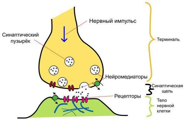 patogenez-depressii_s.jpg